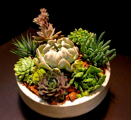 Succulent Garden P225 from Fabbrini's Flowers in Hoffman Estates, IL