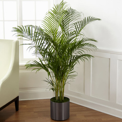 Palm 4ft P113 from Fabbrini's Flowers in Hoffman Estates, IL