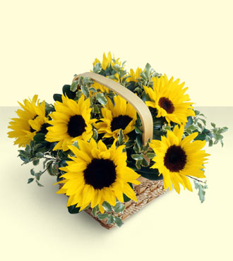 FTD Sunflower Basket from Fabbrini's Flowers in Hoffman Estates, IL