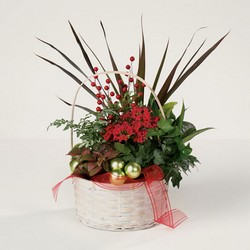 Holiday dish garden C104 from Fabbrini's Flowers in Hoffman Estates, IL
